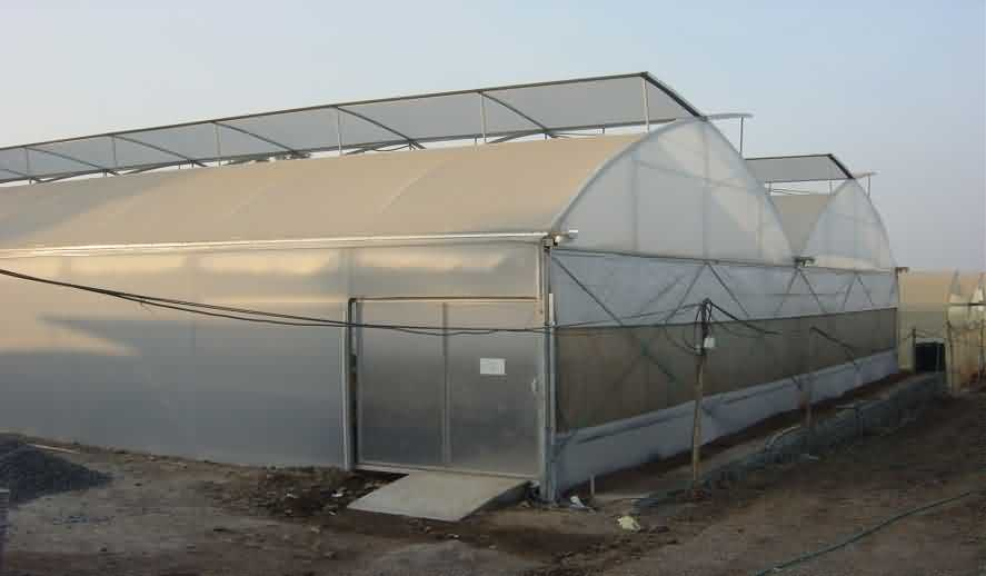 Green house for tomato cultivation