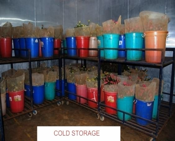 Roses cold storage