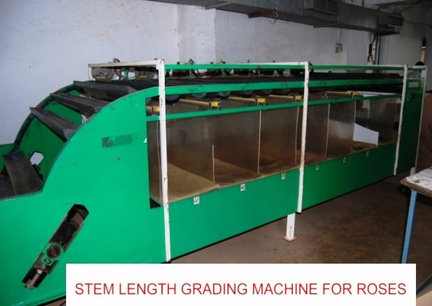 Rose stem length grading machine