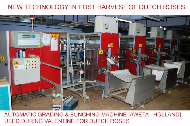 Automatic grading and bunching machine for rose