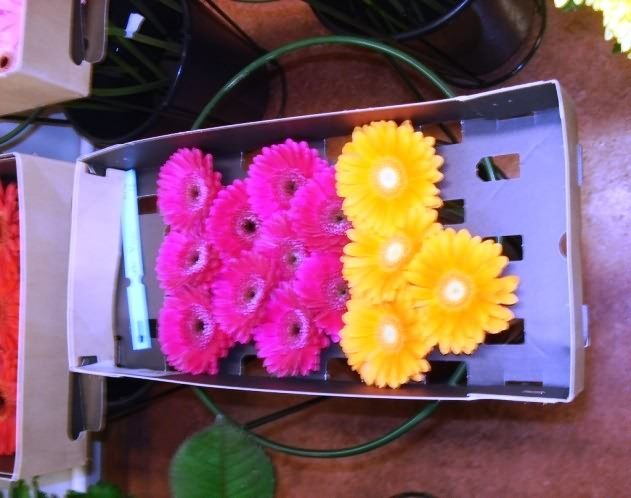 Export packaging- Drying of gerbera stems