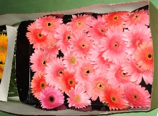 Corrugated boxes packaging of Gerbera