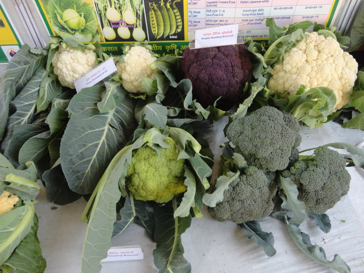 cauliflower and brocceli vegetables