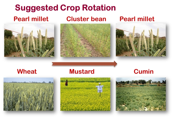 Suggested crop rotations