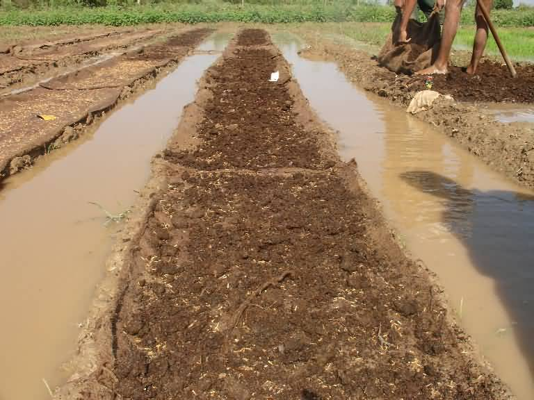 Irrigation in paddy nursery