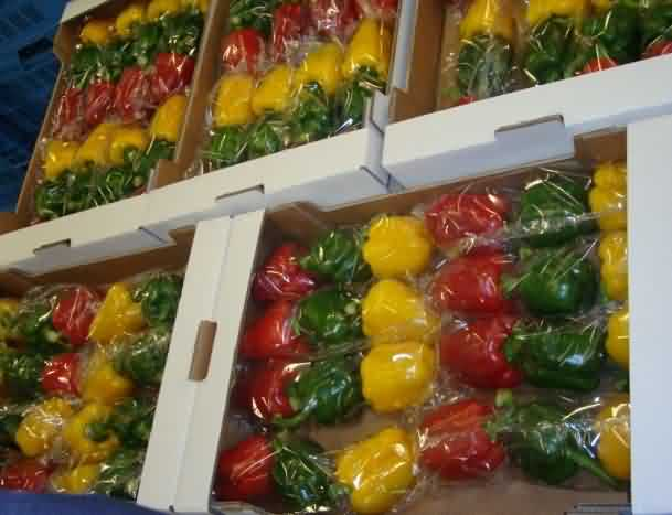 Packaging of capsicums in boxes