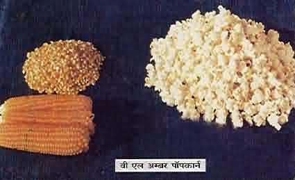 VL ambar variety of pop corn