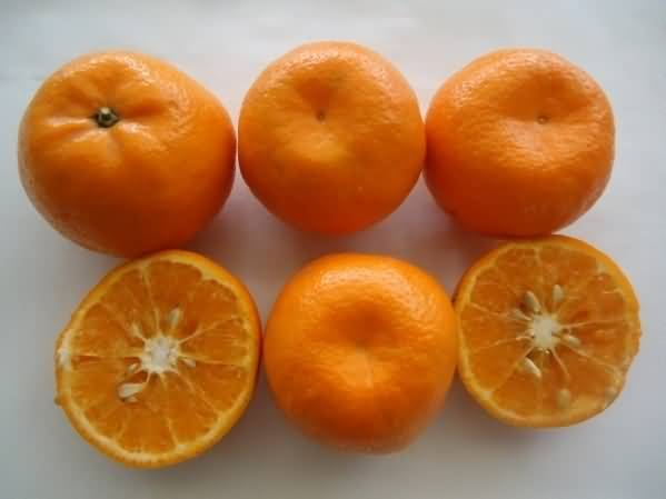 Kinnow fruit