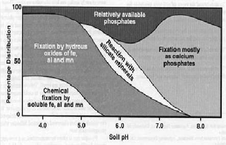 Relation between soil pH and per cent distribution of available phosphorus in Indian soils