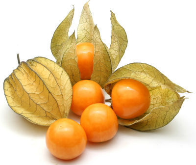 Cape Gooseberry or Rasbhari crop