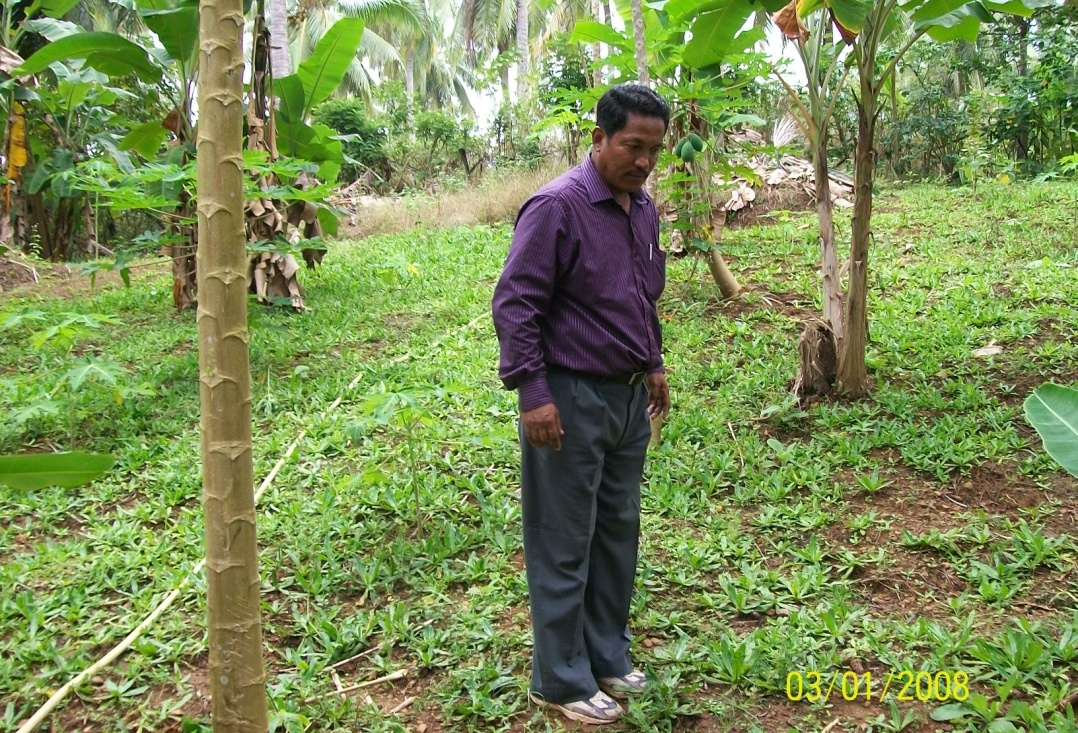 Broad dhaniya as additional crop in mixed fruit orchard