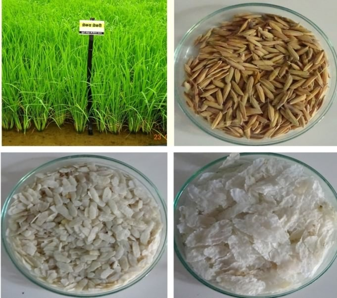Value addition in rice