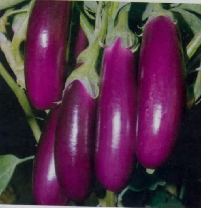 Image result for बैंगन